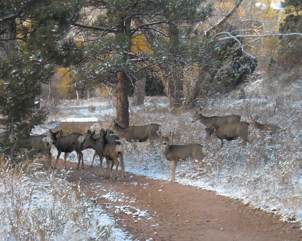 Deer at Garden of the Gods Park